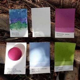 As cores que a Natureza dá